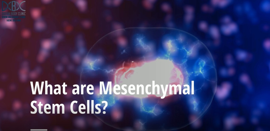 what are mesenchymal stem cells