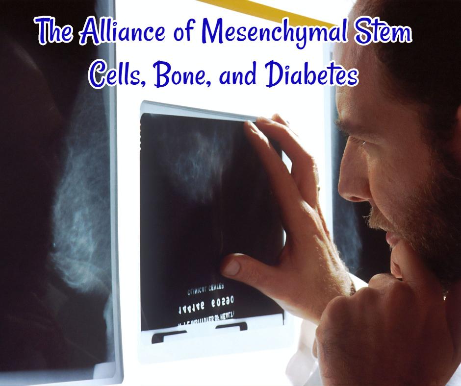 The Alliance of Mesenchymal Stem Cells, Bone, and Diabetes